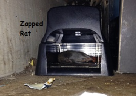 Zapped Rat